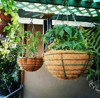 Hanging Baskets Prepare your Garden for Spring