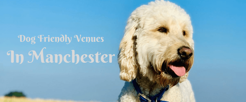 Dog Friendly Venues in Manchester
